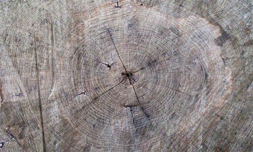 10 суперкачественных тестур дерева.