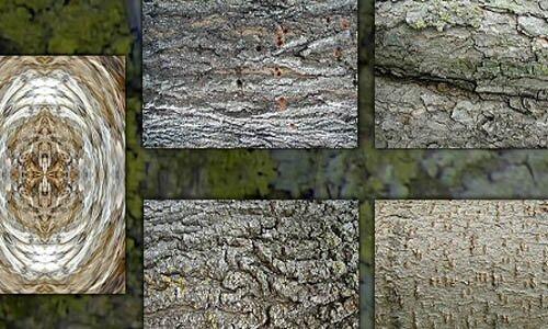200 бесплатных текстур коры дерева.
