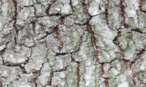 12 бесплатных высококачественных текстур дерева.